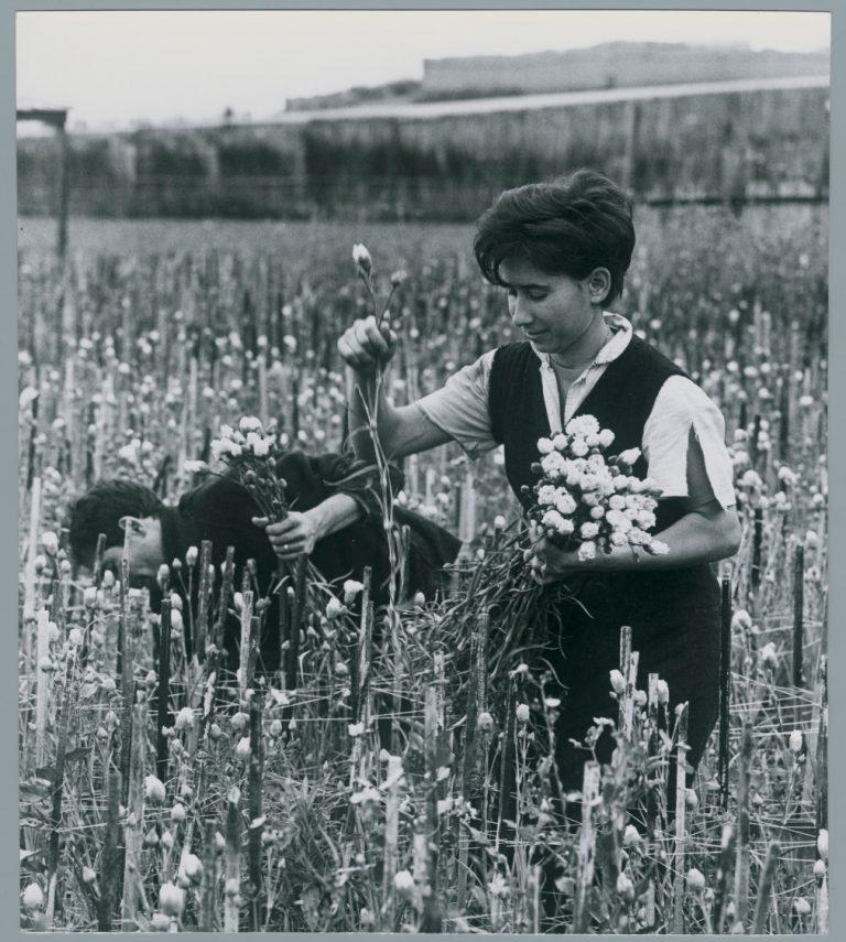 Floricoltura a Mortola, Pepi Merisio